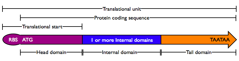 ProteinDomains.png