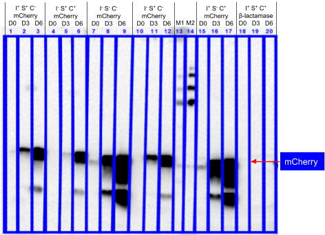 Western_blot_of_cellular_soluble_protein.png