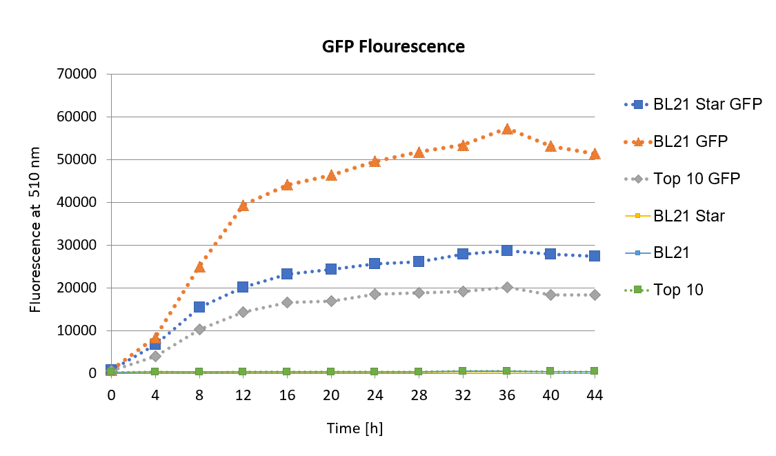 Three strains expression on GFP and its control