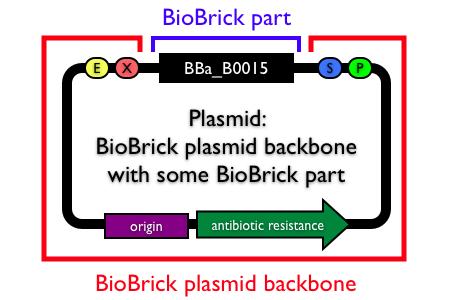 Plasmid backbones - parts.igem...