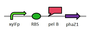 PhaZ1_brick_diagram.jpg