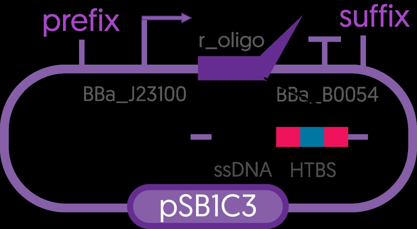 plasmidconstruct