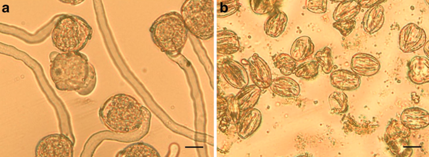 pollen germination observations Pollen germination and the generation of the pollen tube can be achieved in vitro, thus offering an excellent opportunity to observe the processes associated with plant.