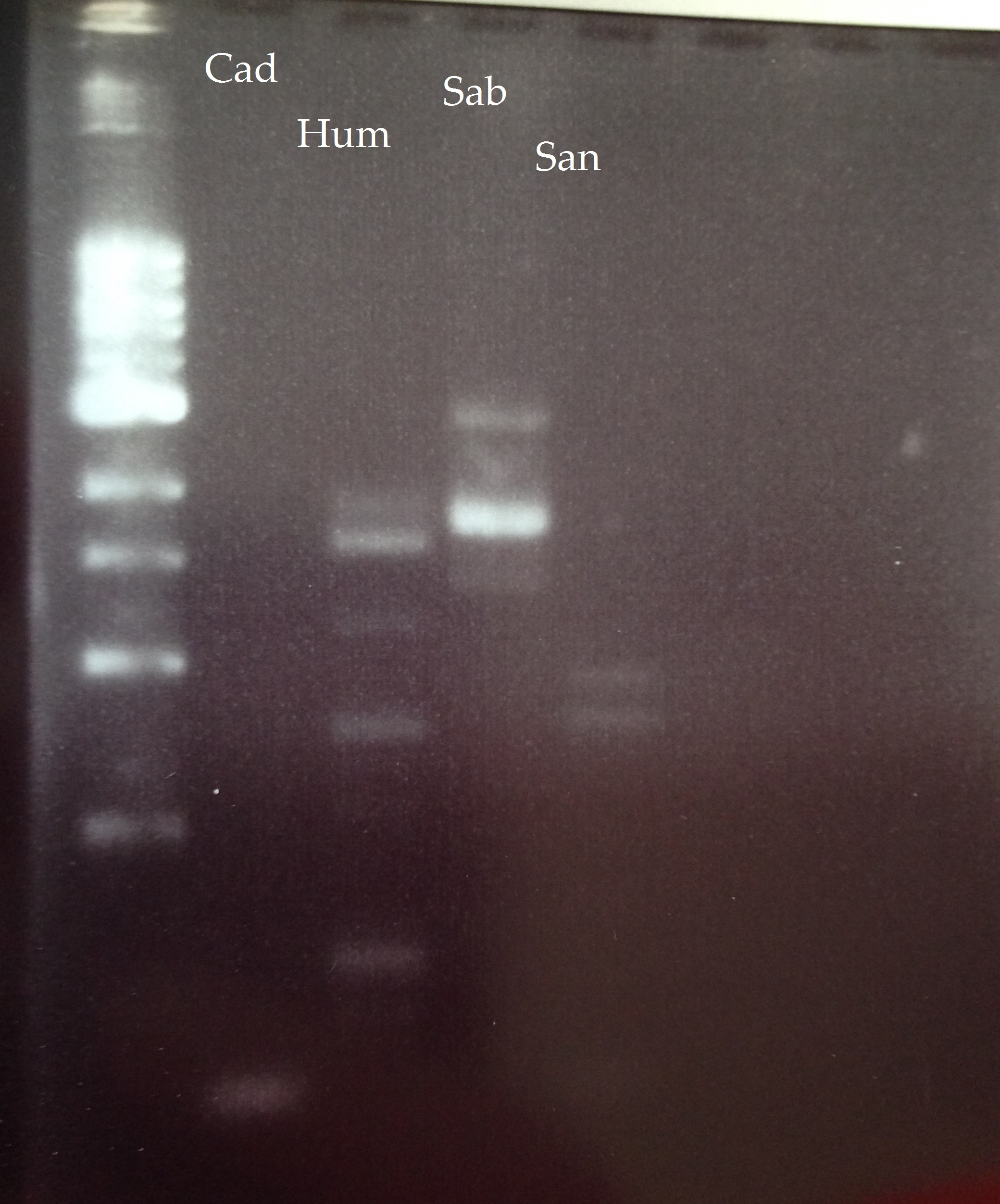 VU_First_RT_PCR_results.JPG