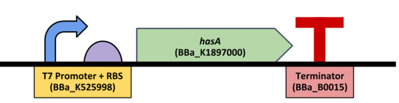 Part:BBa K2380001 - parts.igem.org