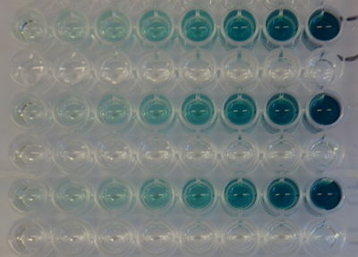 laccase enzyme assay protocol