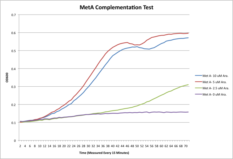 800px-MetA_complementation_no_fluor.png